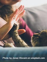 pet cat dog elder aged home care