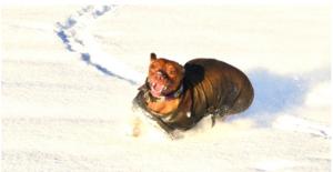 Lupin my barking dog